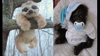 Cute baby animals Videos Compilation cute moment of the animals - Cutest Animals #6