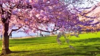Urik gullaganda...uzbek song about orchard blossom