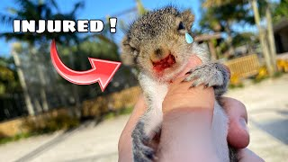 BABY SQUIRREL FOUND ABANDONED & INJURED ! WHAT NOW ?!