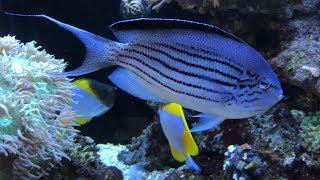 Beautiful Coral Fish & Stunning Aquarium