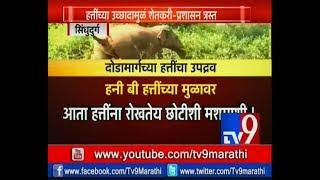 Sindhudurg: जंगली हत्तींना रोखणार मधमाश्या   'Honey Bee' चा पर्याय-TV9