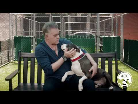 Ray Liotta ACC | I Was Adopted