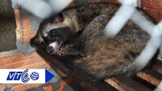 Đột nhập hầm nhốt thú rừng của nhà hàng | VTC