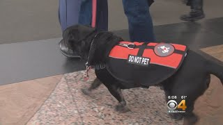 Delta Airlines Puts Leash On Service Animals