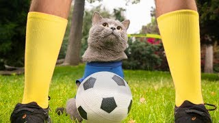 World Cup Cats