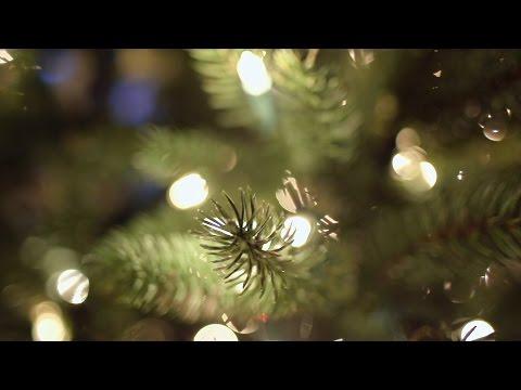 Beachfront B-Roll: Christmas Tree Bokeh (Free to Use HD Stock Video Footage)