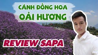 Review Cánh Đồng Hoa Oải Hương SaPa - Tàu Hỏa Leo Núi Mường Hoa SaPa