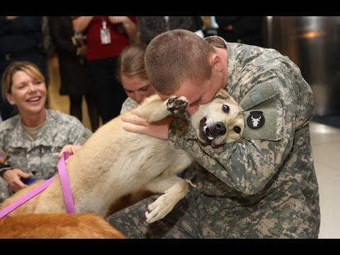 Dogs Welcoming Soldiers Home Compilation (2013)