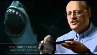 深海のハンター1