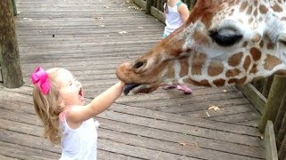 FORGET CATS! Funny KIDS vs ZOO ANIMALS are WAY FUNNIER! - TRY NOT TO LAUGH - YouTube