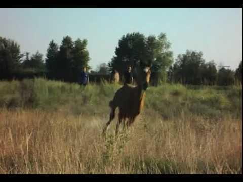 Djamila si crede spirit cavallo selvaggio musica movil for Spirit colonna sonora