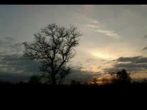 Un Gato En La Oscuridad ~ ♪ Musica Romantica ♪