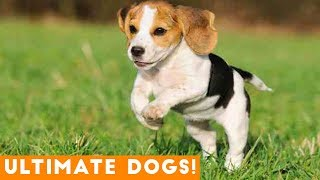 Ultimate Cute and Funny Dogs of 2018 | Funny Pet Videos - YouTube