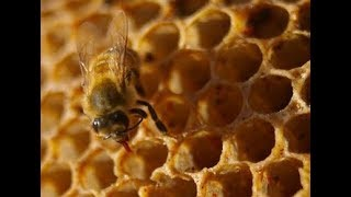 How Animals And Insects Build Their Home   Nature's Engineers - Prehistoric