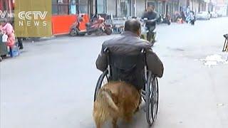 """بالفيديو.. كلب """"لطيف"""" يدفع كرسى صديقه المتحرك فى كل مكان يريده"""