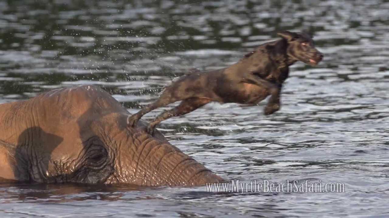 Uma elefoa e uma cadela tornaram-se amigos