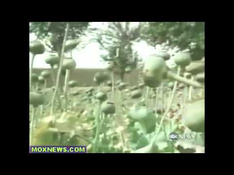 Military Helping Afghan Farmers Grow Opium Poppies!