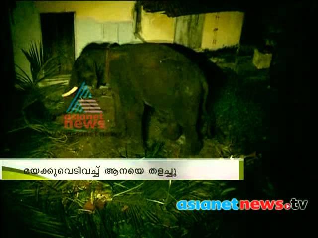 elephant  mov