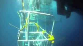 ホオジロザメ38