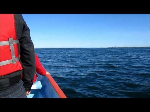 Mamma and Baby Grey Whale at San Ignacio Lagoon (Baja Expeditions)