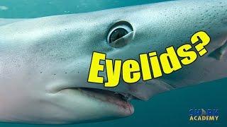 サメの生態を解説