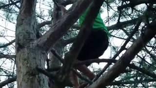 Greystoke: The Legend of Jason climbing trees at Franke Park 07/01/2018