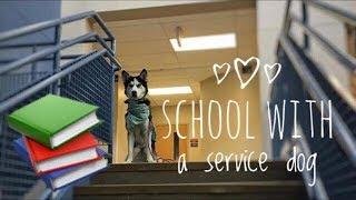 Service Dog at High School