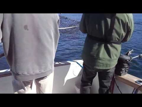 Fishing For Springs Off Sooke BC