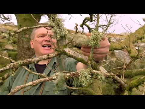 wilderness walks with ray mears Dartmoor