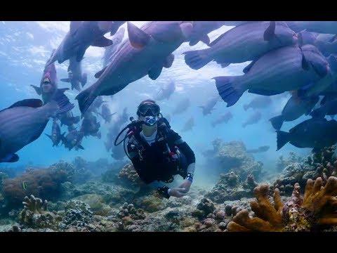 Scubapro S620ti Scuba Diving Regulator
