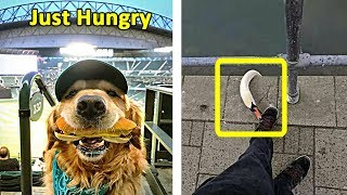 This Is How Hilarious Animals Can Be