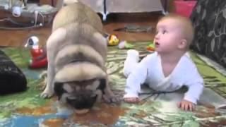 Cão guloso se recusa a dividir biscoito com bebê