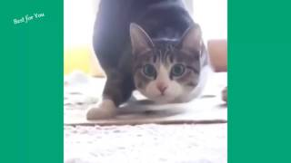 funny cat 2017    Funny Cats Vine Compilation September 2015