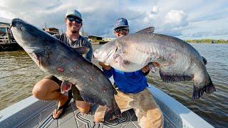 Monster Mississippi River Catfish