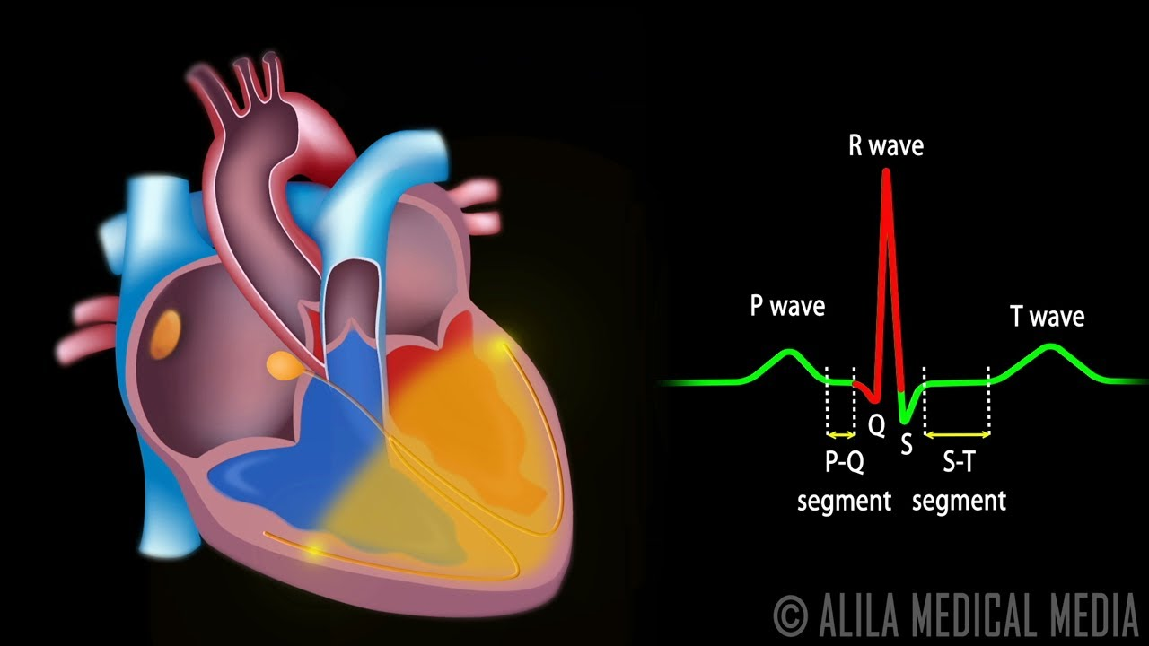 Heart Diagram Powerpoint By Ithinkheslostit