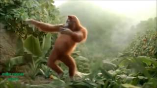 Funny Ape Song. Cartoon Parody. Dance Music Pop Songs. (Dancing Gorilla) Kids Cartoons mov(new)