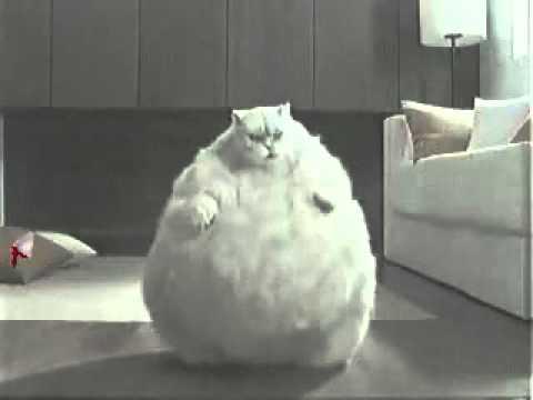 Fat Cats Dancing 118