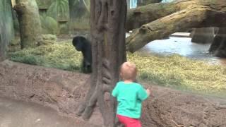 ZA DOBRO JUTRO: Slatko ćete se nasmejati kada vidite kako se dete igra sa bebom gorilom (VIDEO)
