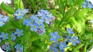 Spring Song Instrumental - Piano & Pan Flute Music - Nature Meditation