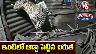 Leopardess gives birth to cubs inside hut, viral video..