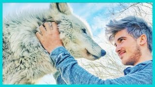 PLAYING WITH A REAL WOLF!
