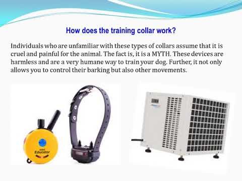 How a Small Dog Shock Collar can Help?