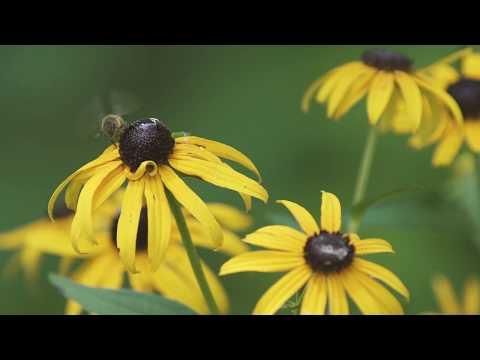 Atlantic Coast Pipeline Pollinator Habitat Initiative