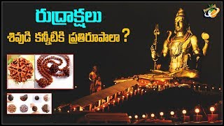 Real And Mysterious Story Behind Rudraksha | Planet Leaf
