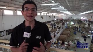 Capital Nacional da Raça Jersey - Feagro 2019 - Braço do Norte / SC