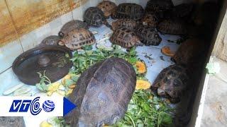Thị trường động vật hoang dã: Dễ như mua rau | VTC