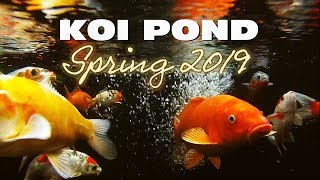 Koi Pond on the First Day of Spring