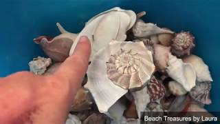 My shells are stinky!  ➩ Shell cleaning tips!! 🐚