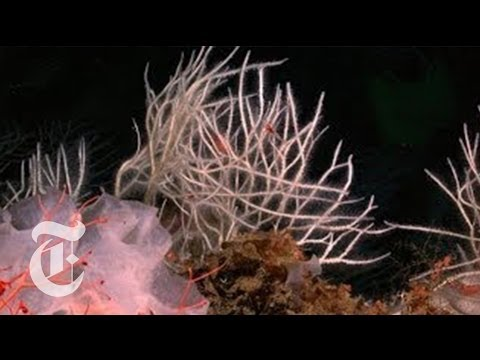 Killer Sponges | ScienceTake | The New York Times