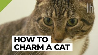 How to Get a Cat to Like You   Lifehacker